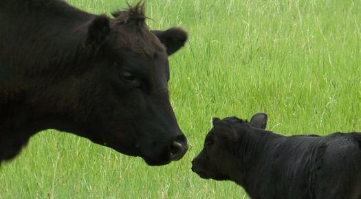 Oklahoma Farm Report Hot Summer May Cause Southern Plains