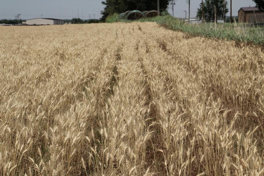 Oklahoma Farm Report - KCBT Sets New Annual Trading Volume ...