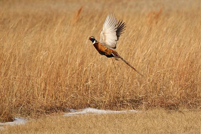 List of birds of Oklahoma - Wikipedia