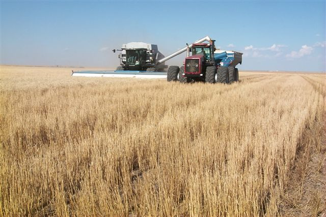 Wheat Harvest Arrives In Kansas