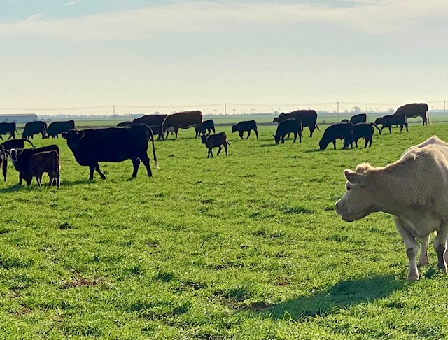 Livestock grazing can reduce agriculture's carbon footprint